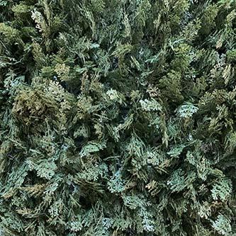 Gazon synthétique Cyprès vert
